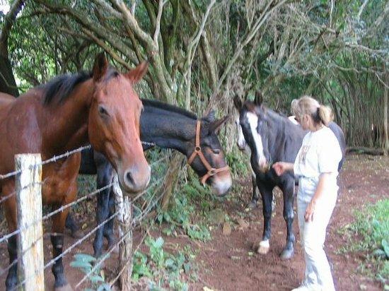 O'Luina Villa: Beautiful grounds to walk, jog and run in nature!