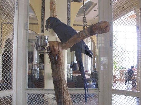 El Conquistador Resort, A Waldorf Astoria Resort: El Con Tropical Bird