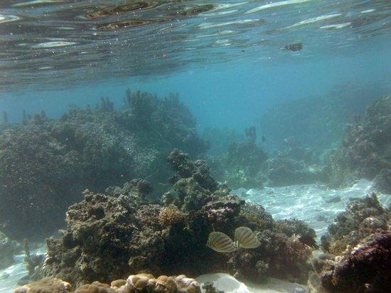 Ta'ahiamanu Beach : Notice the (lack of) depth.