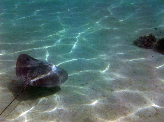 Ta'ahiamanu Beach : Hey, ray.