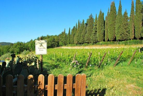 Querceto di Castellina : Surrounding view