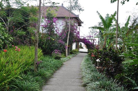 Munduk Moding Plantation: Dans les allées
