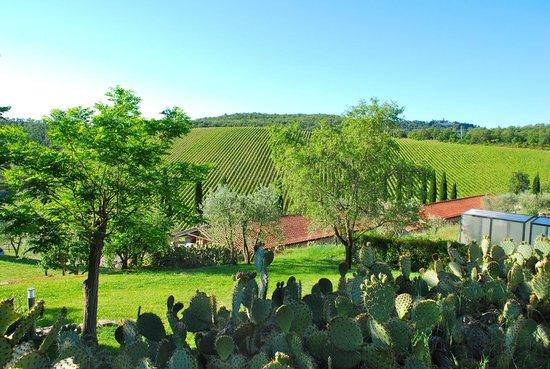 Querceto di Castellina : Surrounding vineyard