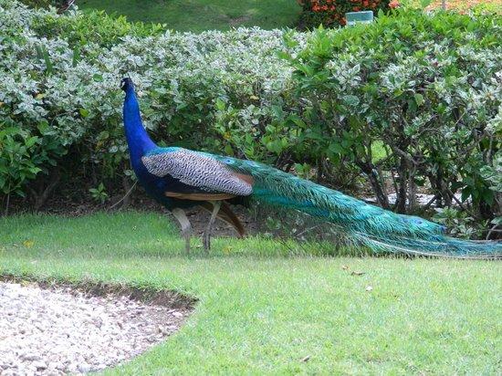 Meliá Caribe Tropical : Fauna