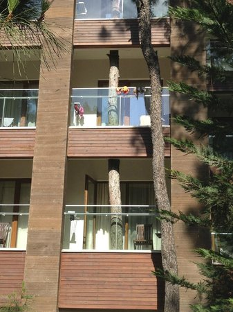 Voyage Sorgun : pine tree growing through the hotel balcony(G-Block)