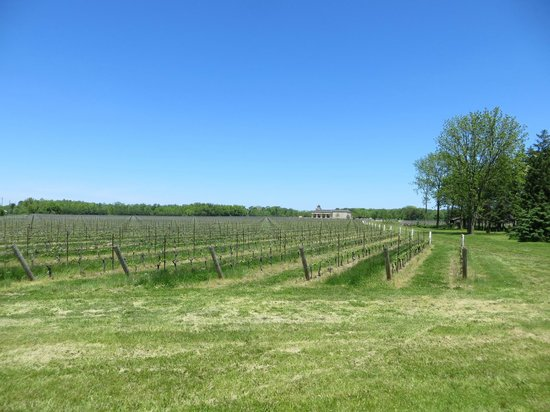 Grape Escape Wine Tours: view from the bike