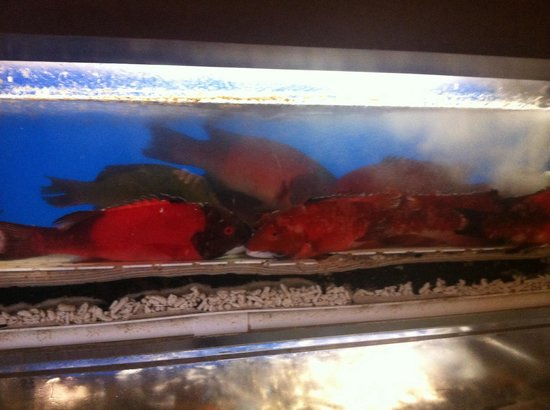 Lunasia Dim Sum House: Live fish and shell fish