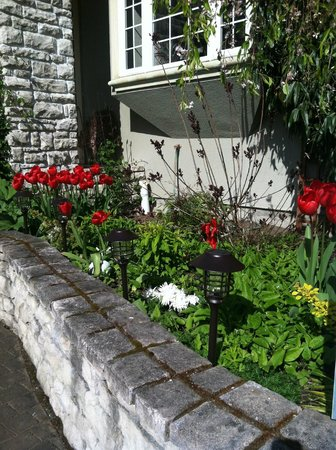 Viewmont Manor: Tulips in bloom