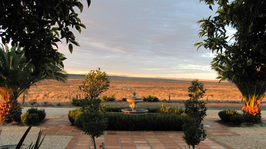 Jules of the Karoo: View from our room of springbok on the plain