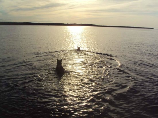 Munising Tourist Park Campground: Dogs love the water...