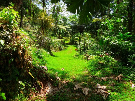 Princesa de la Luna Eco Lodge: Tropical trail to follow.