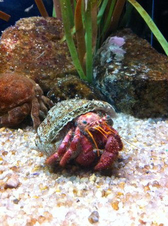 L'Aquarium de Barcelona: weird sea crab