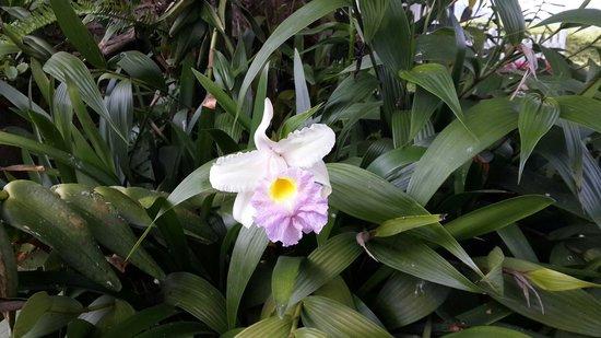 Cabanas Hessen: Una hermosa orquidea