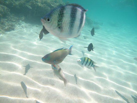 Hilton Marsa Alam Nubian Resort: beach & fish