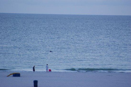 South Beach Condo/Hotel : Dolphin from balcony