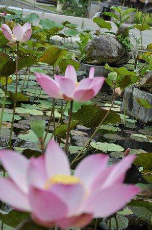 Belmond Jimbaran Puri: Les jolis lotus de l'étang