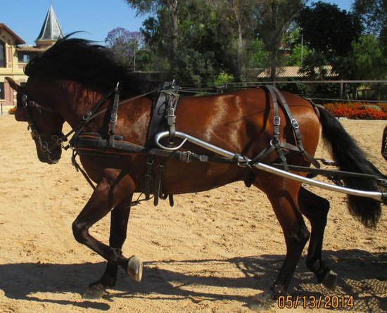 Fundacion Real Escuela Andaluza del Arte Ecuestre: Real school horse