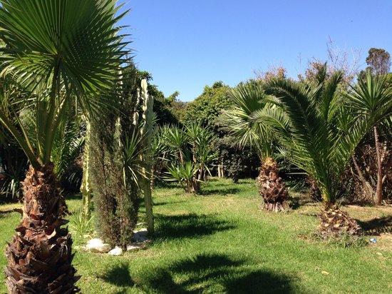 Thalassa Mahdia : Jardin