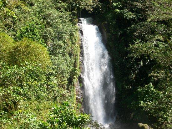 Dominica Botanic Gardens: Mama falls