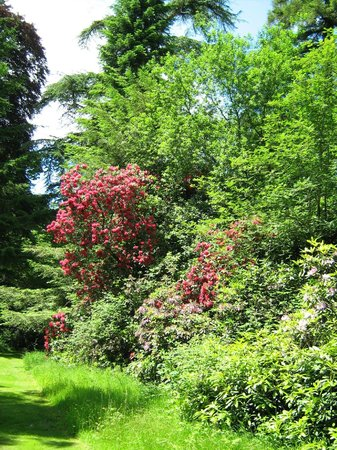 West Dean Gardens: Rhodendrons in late bloom