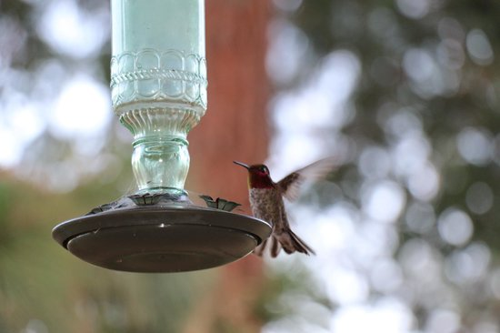 Evergreen Haus: Humming bird