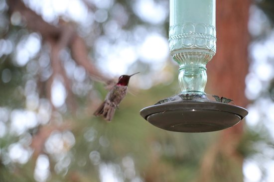 Evergreen Haus: Hummingbird