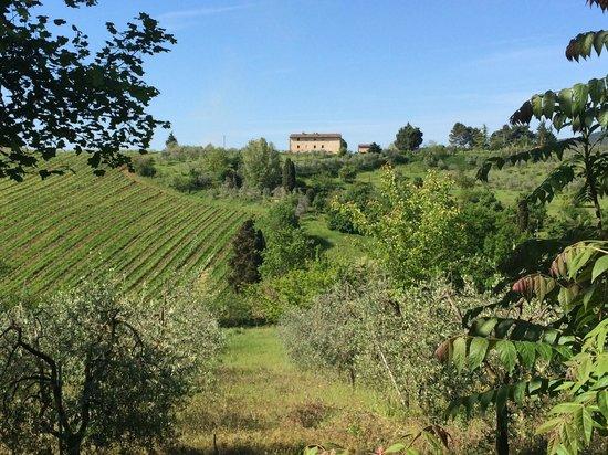 Il Vicario: Close to Il Vicaro