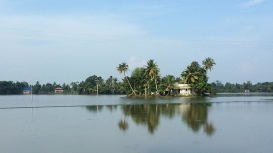 Thevercad Homestay: The paddy fields of Kainakary