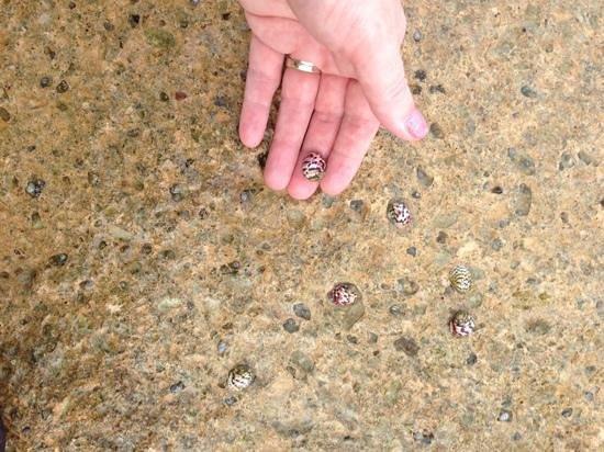 Hidden Beach Resort by Karisma: cute water snails