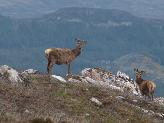 Eagle Brae: Deer seen on our hill walk