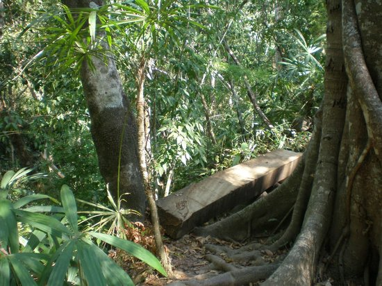 Vallarta Botanical Gardens: This log is part of the trail