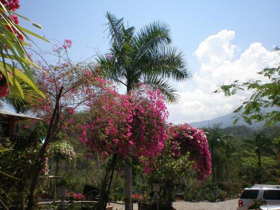 Vallarta Botanical Gardens: Part of the flora