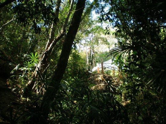 Vallarta Botanical Gardens: Bring your hiking boots