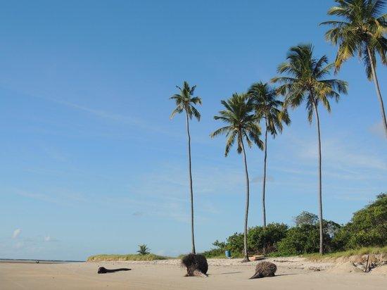 Praia De Maracaipe : Playas de Maracaipe