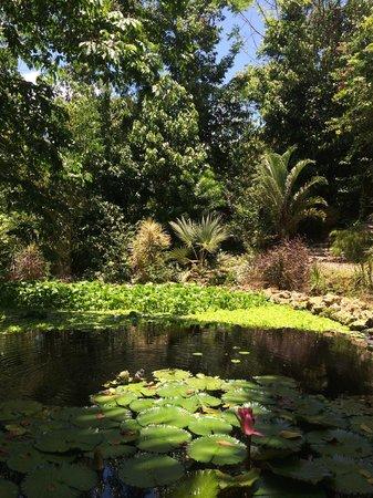 Hotel Mocking Bird Hill : Hotel garden