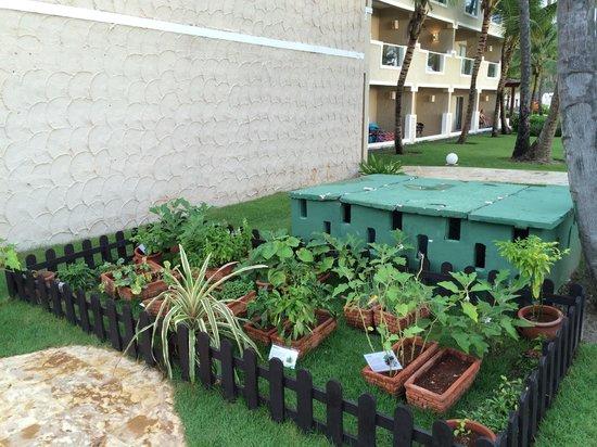Dreams Palm Beach Punta Cana: Garden by the preferred pool