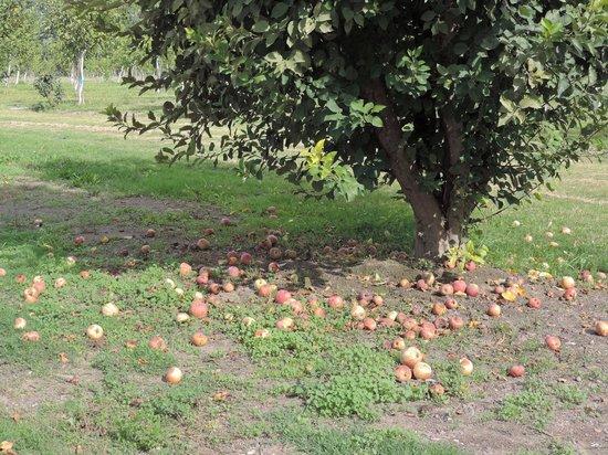 Finca Ogawa : Muchas manzanas