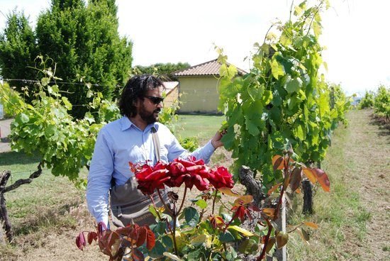 Antiqua Tours: Wine, Cultural and Culinary Experiences : Ettore showing us the grape vines.