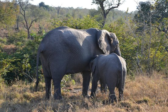 Idube Game Reserve Lodge: Elephants - Idube 2014