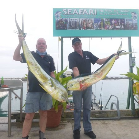 Seafari Fishing Charters: Day 2 : Twin Mahimahi