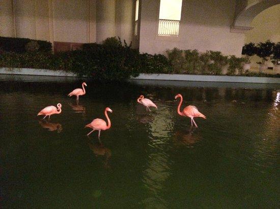 Iberostar Grand Hotel Bavaro: Flamingos