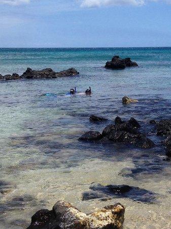 Waialea Beach: Snorkeling