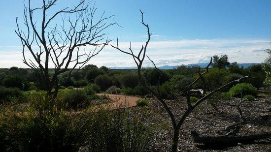 Australian Arid Lands Botanic Garden: From the cafe