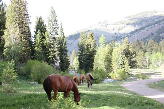Diamond D Ranch: horses out roaming and grazing