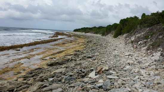 Petites Cayes : Rock/coral/shell bed, makes up about a mile of the trail