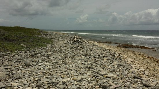 Petites Cayes : More of the rock/coral/shell bed.