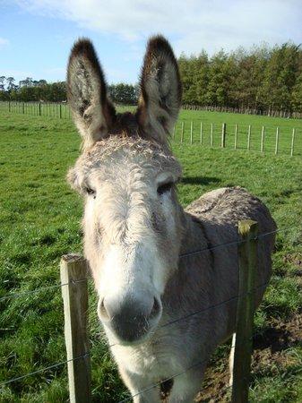 Kahikatea Gardens: Petra one of the resident donkeys
