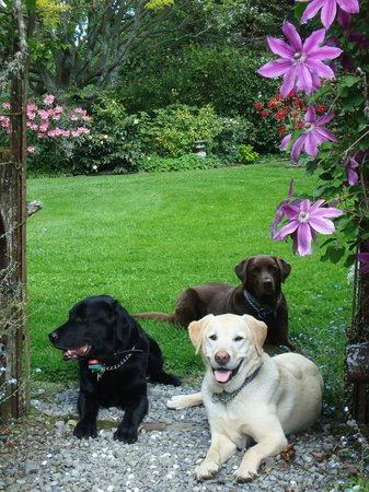 Kahikatea Gardens: The Assistant Gardeners taking a rest.....you may have to ask  to see them
