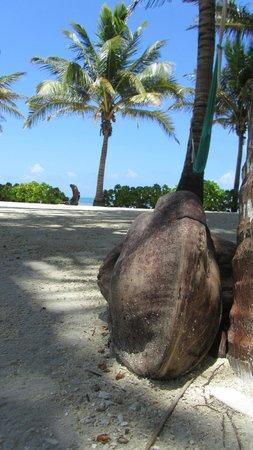 Coral Bay Villas: grounds