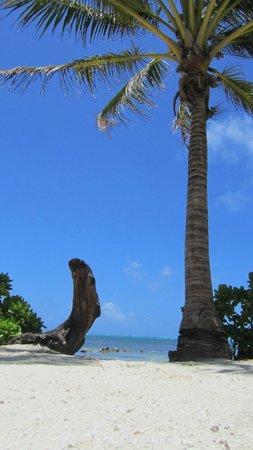 Coral Bay Villas : palms